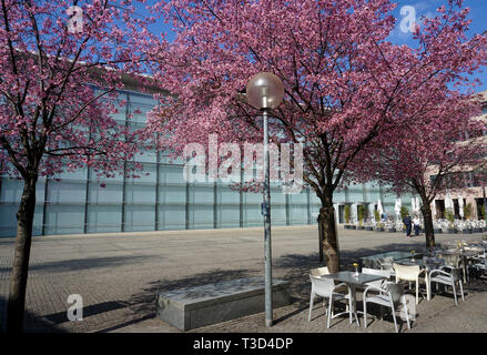 Flowering trees at glas facade of New Museum, museum of art and design, Klarissen place, old town of Nuremberg, Franconia, Bavaria, Germany - Stock Photo