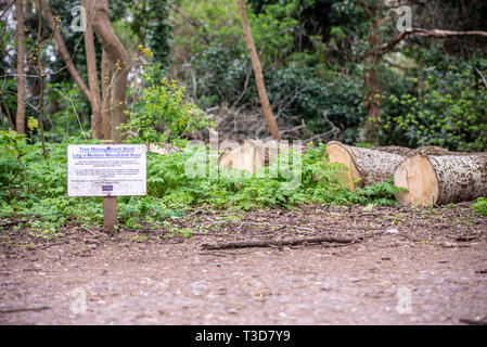 Leg o' Mutton Nature Reserve alongside the River Thames in Richmond upon Thames, London, UK. Tree management work. Felled trees. Cut down trees - Stock Photo