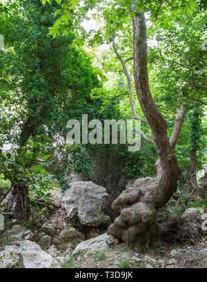 Wald, Dschungel - Stock Photo