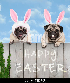 two cute pug puppy dogs, dressed up as easter bunny, hanging with paws on wooden fence, with blue sky background - Stock Photo