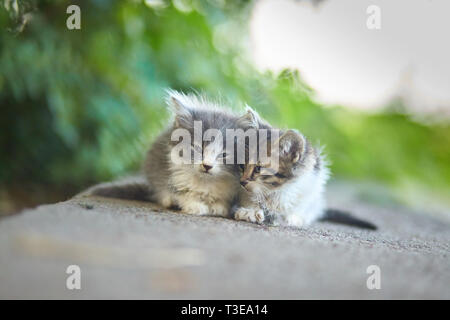 Two kittens on green background in back  light and soft focus - Stock Photo