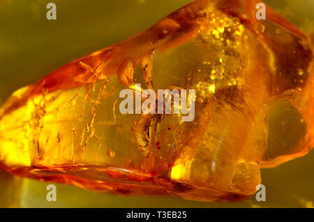 Prehistoric winged ant in Baltic amber - Stock Photo