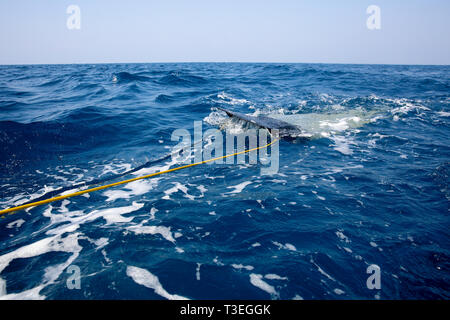 Trolling in the Laccadive Sea to captures surface objects from the deep sea. Negombo, Sri Lanka - Stock Photo