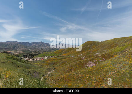 Beautiful superbloom vista in the Walker Canyon mountain range near Lake Elsinore, Southern California - Stock Photo
