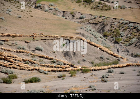 Azerbaijan, Khimalig village, flock - Stock Photo