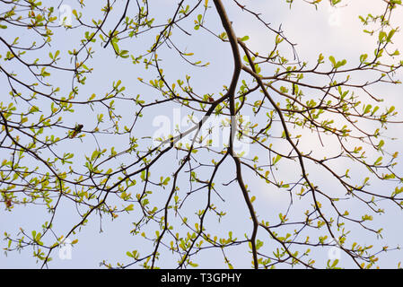 Young leaves bud and branches of tree and sky background - Stock Photo