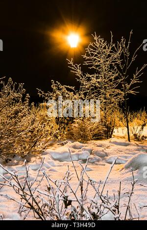 Winter bushes in park and shining lantern. Night shooting in yellow - Stock Photo