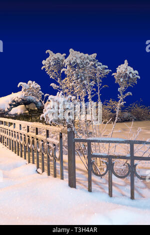 Winter bushes and fence covered with snow in the Park. Night shooting in blue - Stock Photo