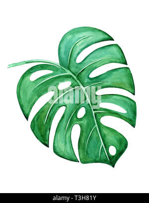 Monstera leaf on a white background. Watercolor illustration, drawn by hand. - Stock Photo