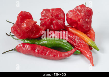 Group of chillies of various kinds on white background. Pepper. Chili pepper. - Stock Photo