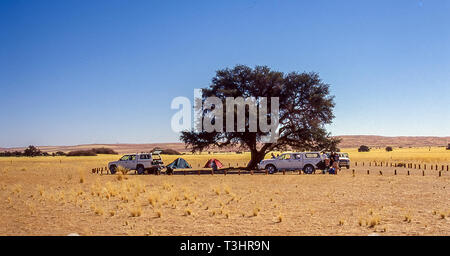 Camp under an acacia near the dune 45 in Sesriem, Namibia. - Stock Photo