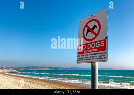 A No Dogs On Beach Sign on the seafront at Weymouth, Dorset, England, UK - Stock Photo