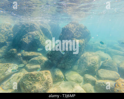 Many fish, anemonsand sea creatures, plants and corals under water near the seabed with sand and stones in blue and purple colors seascapes, views - Stock Photo