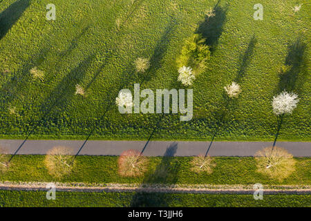 Isernhagen, Germany. 10th Apr, 2019. In Wietzepark, trees cast long shadows on a green meadow. (Aerial photograph with drone) Credit: Christophe Gateau/dpa/Alamy Live News - Stock Photo