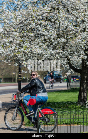 London, UK. 10th Apr, 2019. People enjoy the spring weather and the blossom on the trees in Hyde Park. Credit: Guy Bell/Alamy Live News - Stock Photo