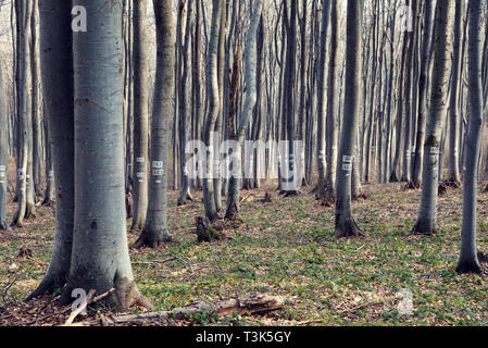 Trees with numbers on it in a deciduous forest in the mountain Selective focus - Stock Photo