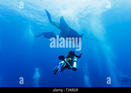 Closeup of diver under a trio of giant oceanic manta rays, Manta birostris, in Palau - Stock Photo