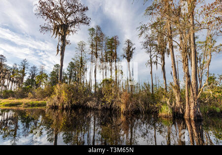A varied landscape in the Okefenokee swamp on a sunny day, with reflections in the still water. - Stock Photo