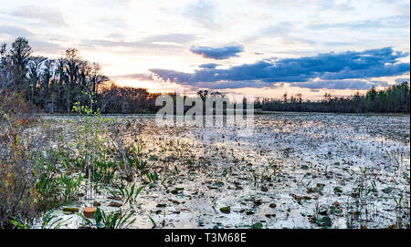 Landscape sunset on east side of Okefenokee swamp refuge. - Stock Photo