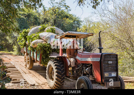 Colonia Independencia, Paraguay - June 20, 2018: Farmer with tractor in Paraguay drives over a winding wooden bridge. - Stock Photo