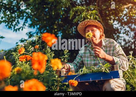 Senior woman gathering flowers in garden. Elderly retired woman smelling flowers - Stock Photo
