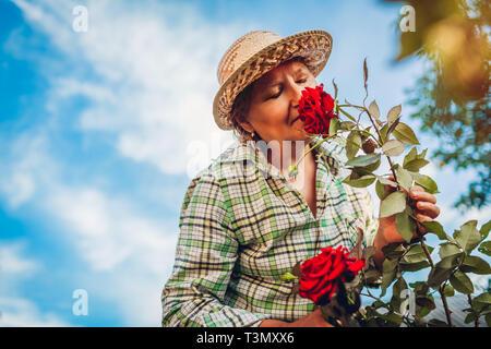 Senior woman smelling flowers in garden. Elderly retired woman enjoying hobby - Stock Photo