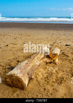 A large piece of driftwood, part of a tree lying on a wide sandy beach on the North Yorkshire Coast - Stock Photo