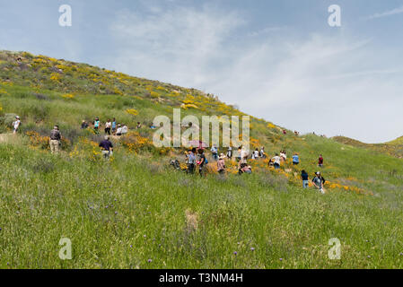 Residents of Southern California enjoying beautiful  superbloom vista in the Walker Canyon near Lake Elsinore - Stock Photo