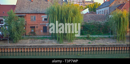 Willow trees in front of houses on a river bank - Stock Photo