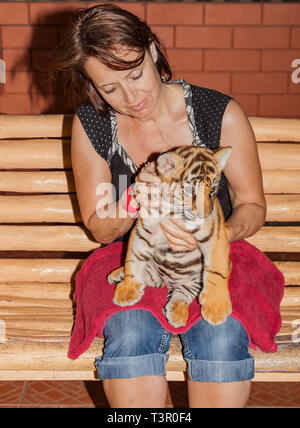 Little tiger baby on the lap of a woman.