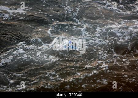 Plastic pollution in Laccadive Sea at Colombo in Srilanka - Stock Photo