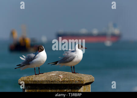 Seagulls,perched,on,seawall,Southampton,services,port,towing,Tanker,Oil,Refinery,Fawley,The Solent,fossil,global,change,warming,tow,assistance,Tug, - Stock Photo