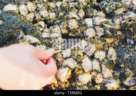 house of crabs on the beach in sea from thailand. - Stock Photo
