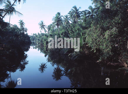 East Malaysia. Sabah. Rainforest with river and palms. - Stock Photo