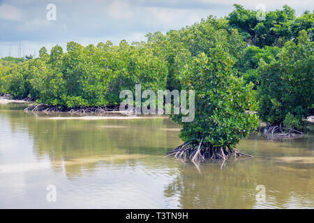 The Pointe D'Esny Wetland near Mahebourg, Mauritius, Mascarene Islands.  The wetlands have been declared a Ramsar Site of International Importance. - Stock Photo