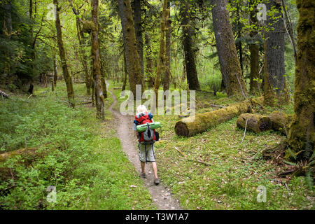 WA00981-00...WASHINGTON - Hiker on the Elwha River Trail in Olympic National Park. - Stock Photo