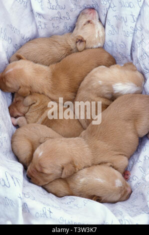 litter of newborn mongrel puppies found abandoned in Spain - Stock Photo