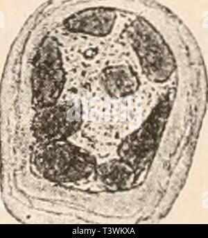 Archive image from page 74 of Die Protozoen als Krankheitserreger des