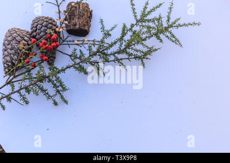 Botanical still life of leaves, pine cones, plants and berries in brown tones against white background. - Stock Photo