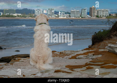 A Golden Retriever puppy dog sits patiently looking out on a nice ocean view - Stock Photo