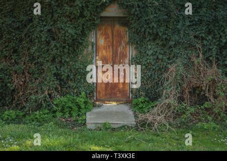 Vines surrounding door, green background and texture - Stock Photo