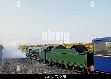 The Miniature Steam locomotive pulling out of the station in a puff of steam at Dungeness Kent England - Stock Photo