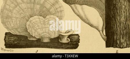 Archive image from page 187 of Die Natürlichen Pflanzenfamilien nebst ihren - Stock Photo