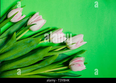 Border of fresh tulips on green background. Copy space. Spring flowers. pink white tulips, Lovely tulip flowers composition. Valentines Day or Mothers - Stock Photo