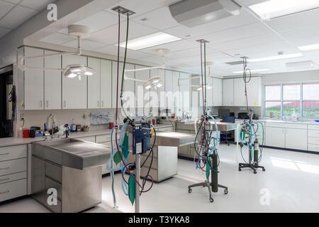 Examining tables in empty animal hospital - Stock Photo