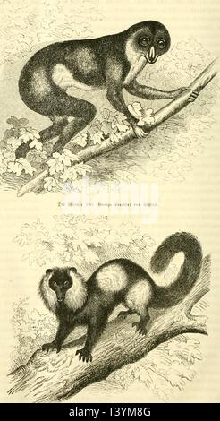 Archive image from page 413 of Die Natur (1852) - Stock Photo