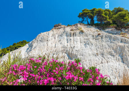 Top of the white cliffs Mons Klint - Stock Photo