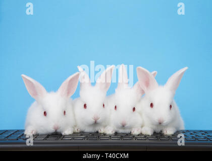 Four adorable white albino baby bunnies perched on a computer keyboard with blue background. All looking at viewer, or monitor screen direction. Techn - Stock Photo