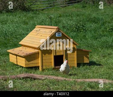 chicken coop with door on timer - Stock Photo