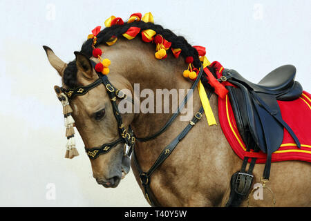Lusitano horse is a breed of very ancient and elegant equines that developed in the Iberian Peninsula - Stock Photo